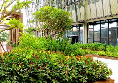 dara-angkor-hotel-garden-landscaping (2)