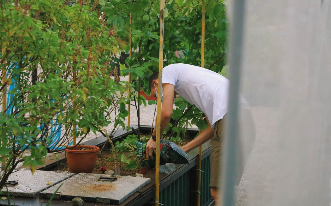 Why Hire a Gardener?