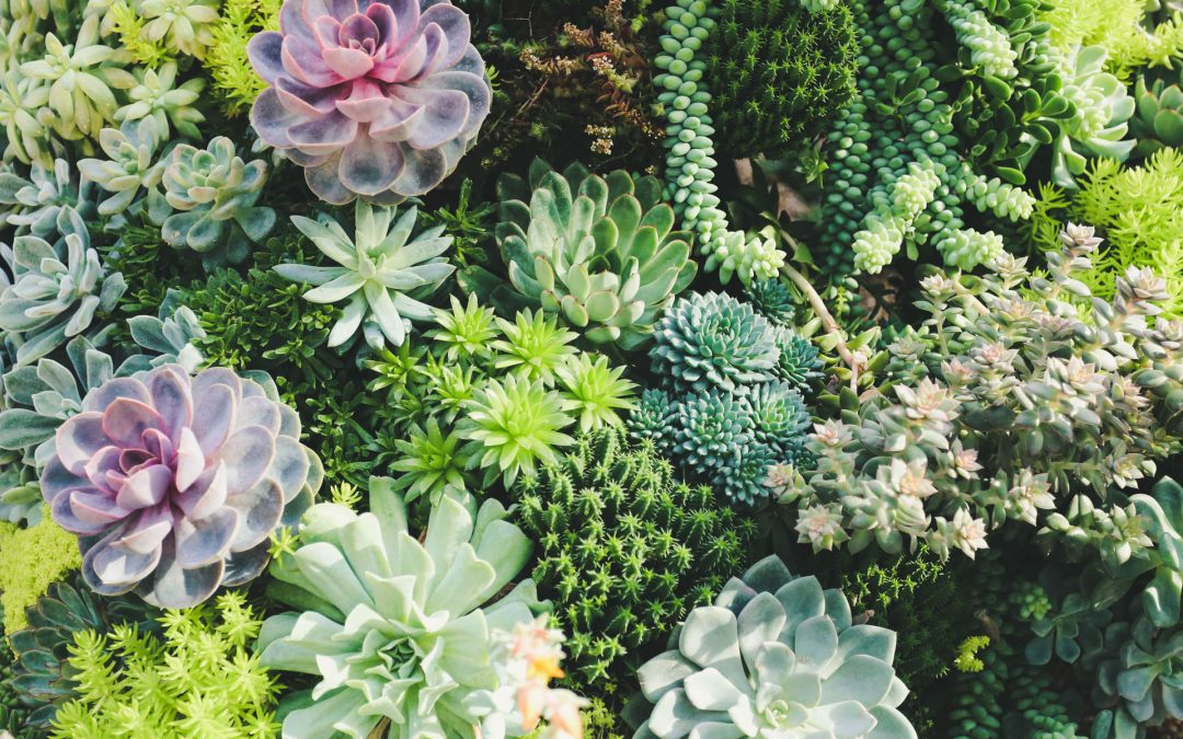 Garden Design Ideas for Small Spaces